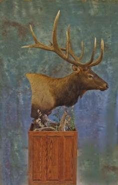 Profile of Elk Pedestal mount. 0